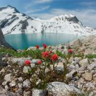 Indian Paintbrush and Thunderwater Lake