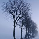 Ghostly winter trees