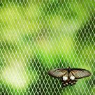 Butterfly in Jail