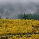 Fall Vineyards