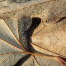 Leaf Pattern Macro At Sunrise