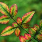 Colourful Leaves