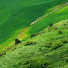 Hillside In The Palouse.