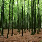 Green wood. forest