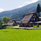 Paddy field around tradition houses