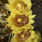 Cactus Flower in Autumn