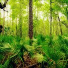 Cumberland Island Jungle