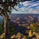 A Grand view of the Canyon