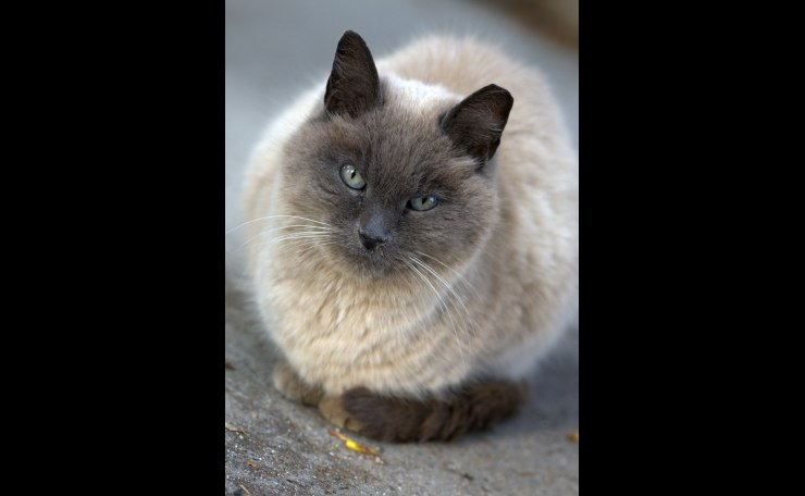 A Grey Cat--I am looking at you!