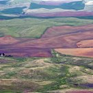 Patchwork In The Palouse.