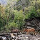 Wildlife in Yubeng