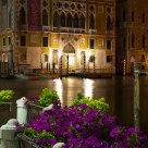 Flowers in Venice by night