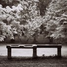 Bench After Rain