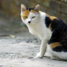 Black nose cat