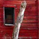 Old Barn with Tree Stump