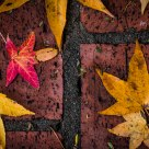 Autumn Leaves & Bricks