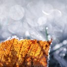 Leaf & Frost
