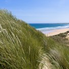 Windswept grass on sand dunes.  The city of Fraserburgh - Scotland.
