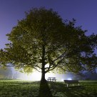 Night Tree; Winslow, Maine