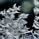 Detail of Window Frost