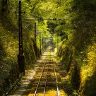 Railway into the forest