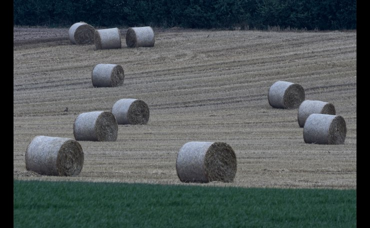 Hayrolls awaiting collection, Nierswalde
