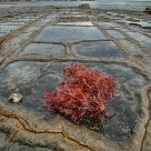Tessalated pavement
